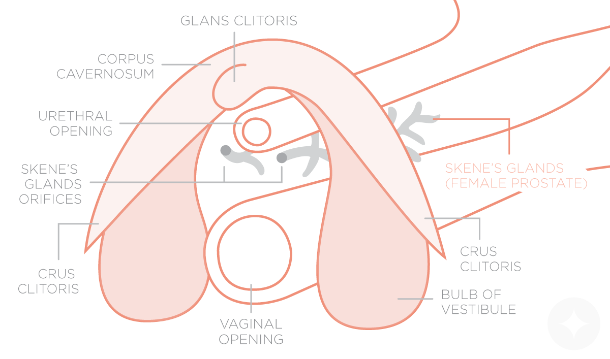 Female G Spot Diagram Manual Guide